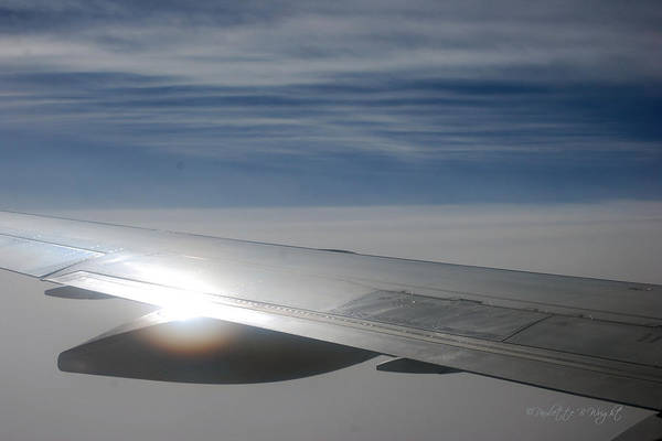 Photograph - The Sun's Kiss On My Wing by Paulette B Wright