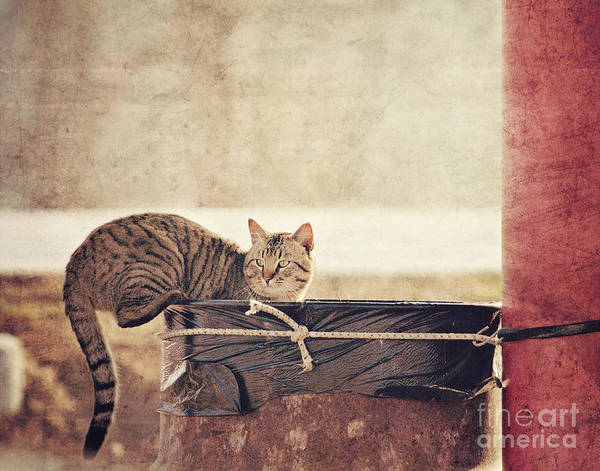 Photograph - Dumpster Diver by Pam  Holdsworth