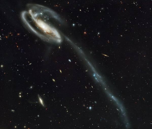 Interacting Galaxies Wall Art - Photograph - The Tadpole Colliding Galaxies by Nasa/esa/stsci/b.preston/science Photo Library