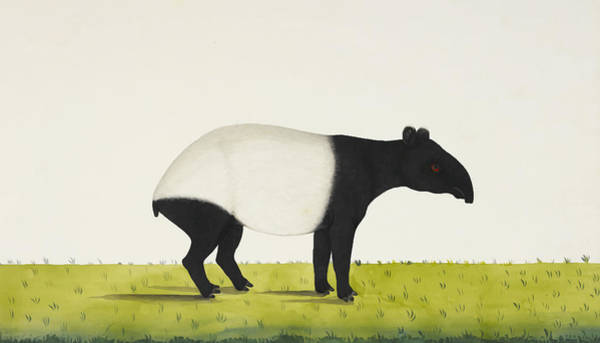 Nose Digital Art - The Tapir by Aged Pixel