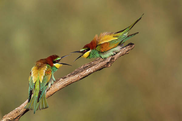 Beaks Photograph - The Territory by Amnon Eichelberg