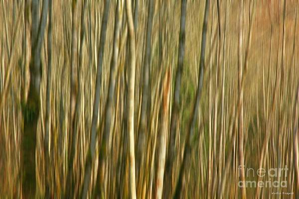 Thicket Photograph - The Thicket by Winston Rockwell