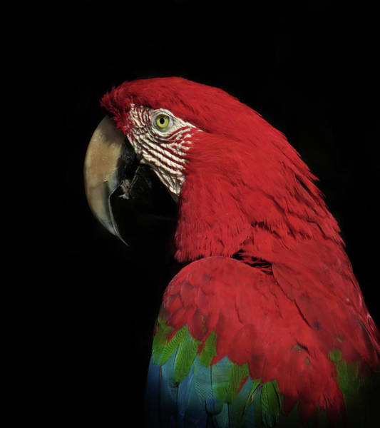 Macaw Photograph - The Thinker by Ferdinando Valverde