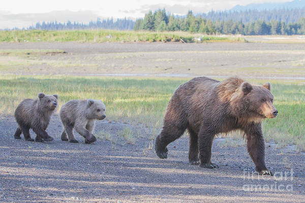 Photograph - The Three Bears by Chris Scroggins