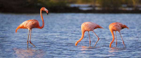 Flamingos Wall Art - Photograph - The Three Flamingos by Adam Romanowicz