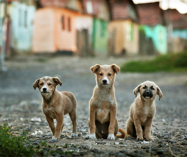 Puppies Photograph - The Three Musketeers by Sorin Onisor