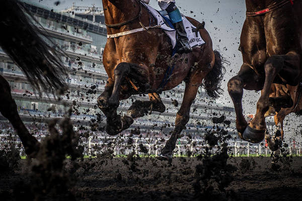 Arabian Wall Art - Photograph - The Thunder Of The Hooves by Sharon Lee Chapman