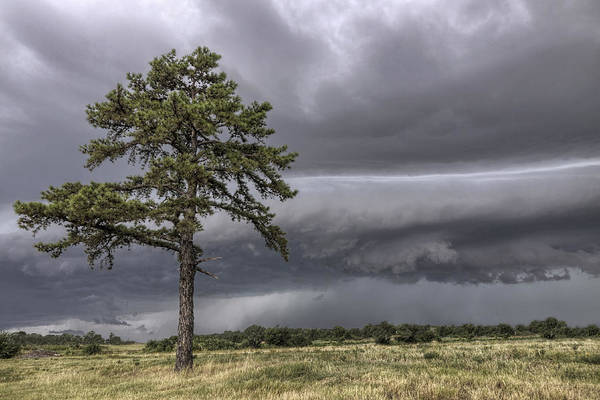 The Thunder Rolls - Storm - Pine Tree Art Print