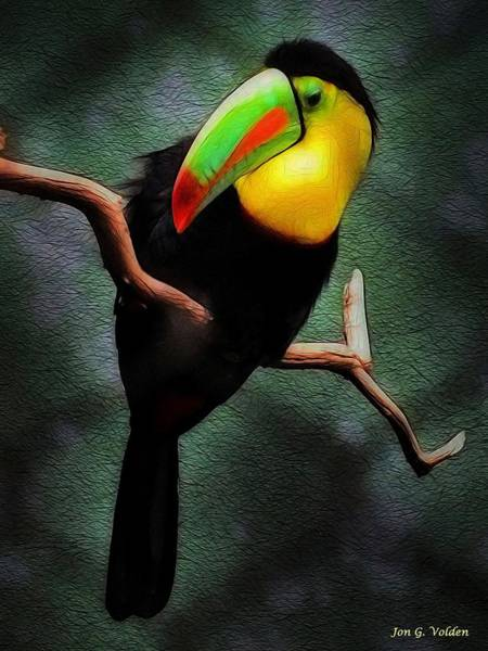 Painting - The Toucan by Jon Volden