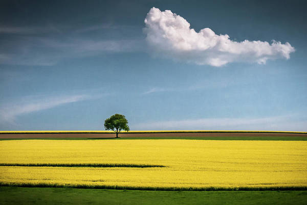Minimalistic Photograph - The Tree And The Cloud by Andreas Wonisch