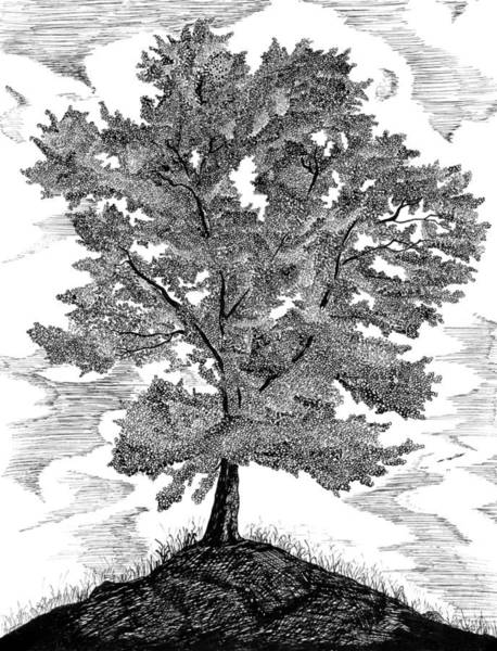 Drawing - The Tree by Carl Genovese