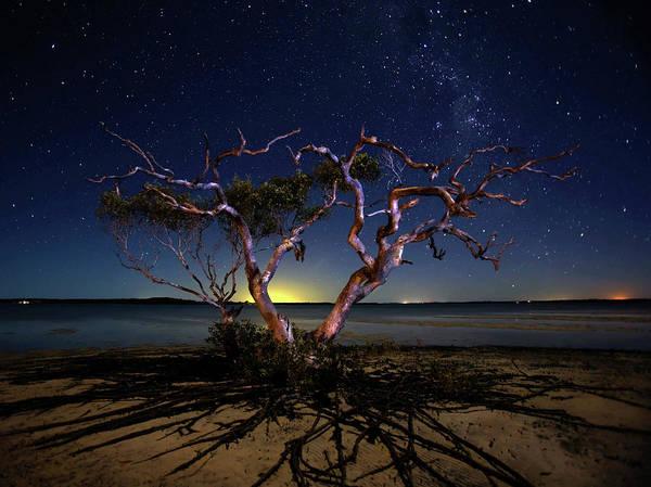 Star Photograph - The Tree by Mel Brackstone