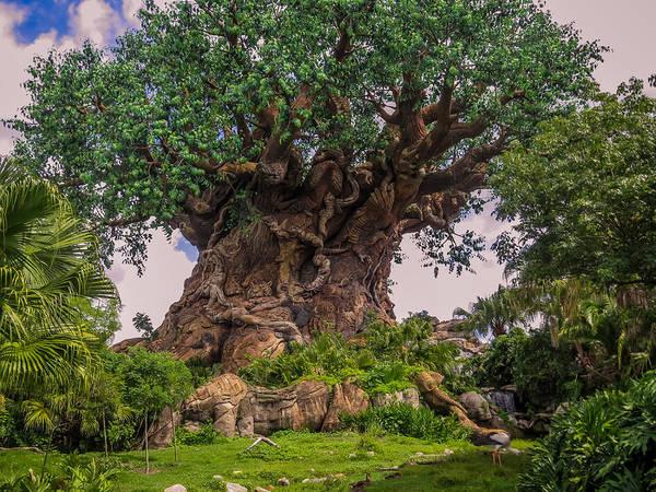 Magic Kingdom Photograph - The Tree Of Life by Zina Stromberg
