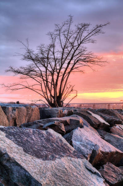 Photograph - The Tree V by JC Findley