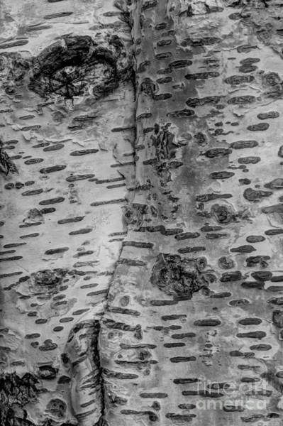 Wall Art - Photograph - The Trees Have Eyes by Heidi Smith