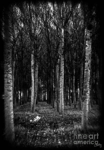 Photograph - The Trees by Prints of Italy