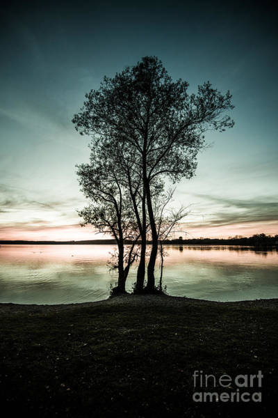 Photograph - The Trees Silhouette  by Hannes Cmarits