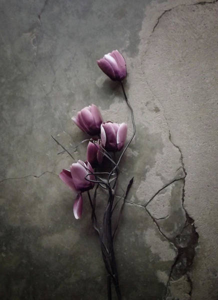 Wall Art - Photograph - The Tulip by Kahar Lagaa