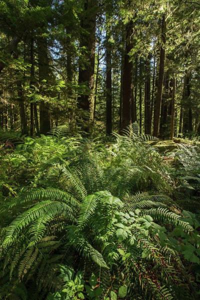 Vancouver Island Photograph - The Vegetation Of Goldstream Provincial by Robert Postma / Design Pics