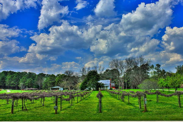 Photograph - The Vineyard by Reid Callaway