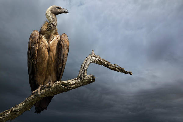 Patient Photograph - The Vulture by Mario Moreno