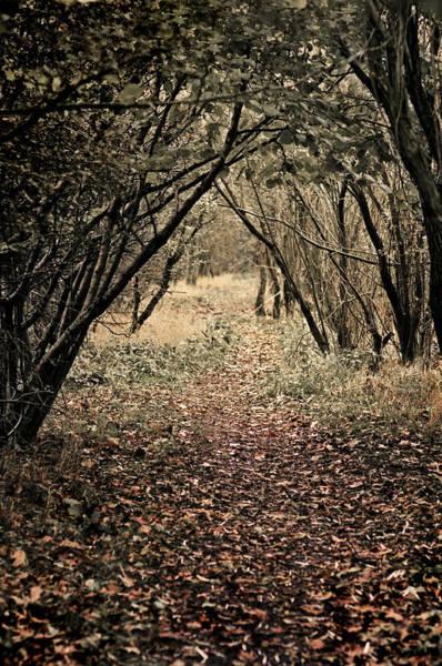 Photograph - The Walk by Meirion Matthias