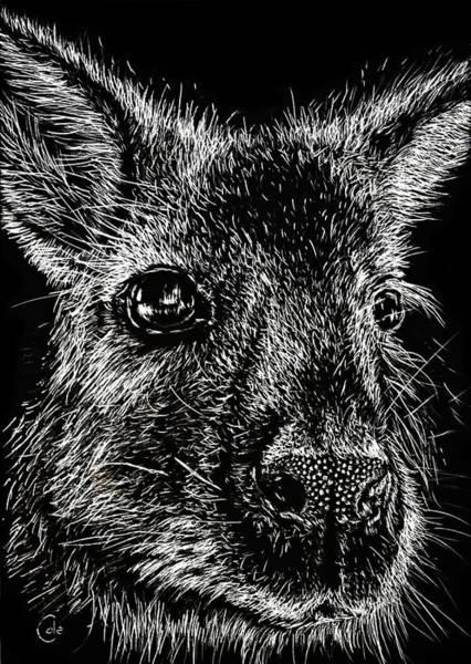Kangaroo Drawing - The Wallaby by Nathan Cole
