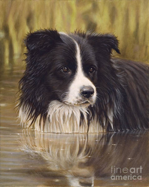 Border Collie Painting - The Water Baby by John Silver