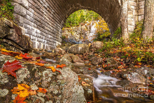 Photograph - The Waterfall Bridge In Acadia by Susan Cole Kelly