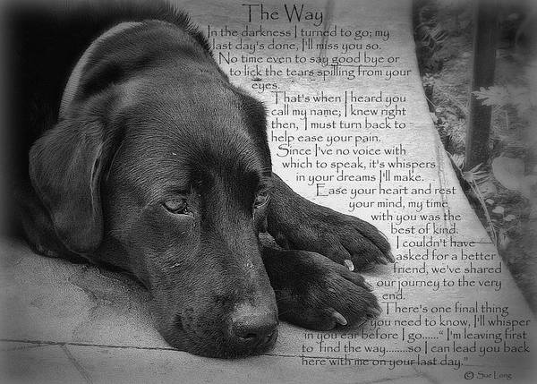 Wall Art - Photograph - The Way Black Lab by Sue Long