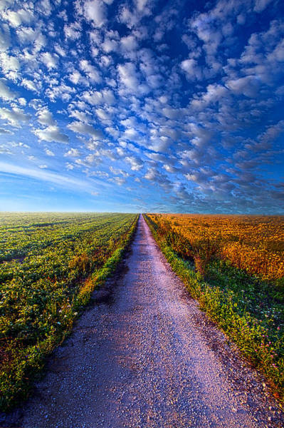 Photograph - The Way Is Clear by Phil Koch