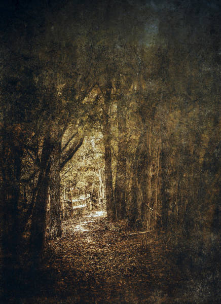 Orange Wood Photograph - The Way Out by Scott Norris