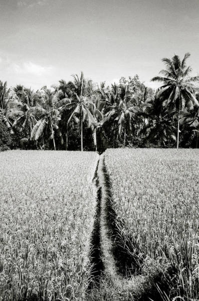 Photograph - The Way by Shaun Higson