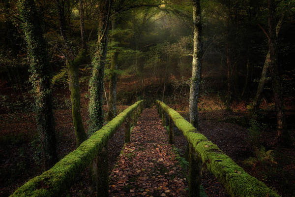 Moss Green Photograph - The Way To The Forest by Chencho Mendoza