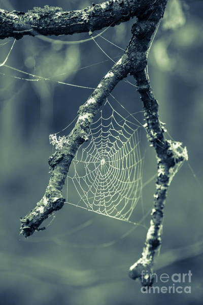 Halloween Photograph - The Webs We Weave by Edward Fielding