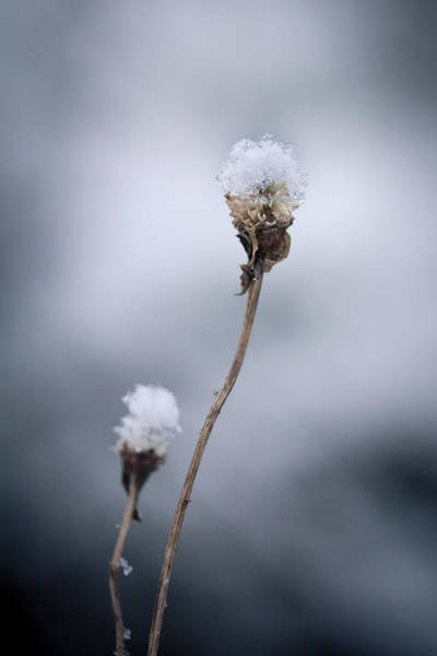 Wall Art - Photograph - The Weight Of Winter by Shane Holsclaw