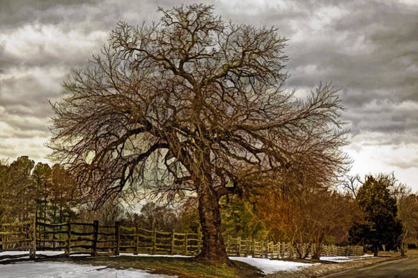 Photograph - The Welcome Tree by Jerry Gammon