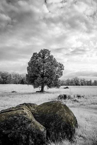 Photograph - The Wheatfield 8d00094 by Guy Whiteley