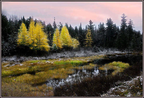 Photograph - The Whisper Of Tamarack by Wayne King