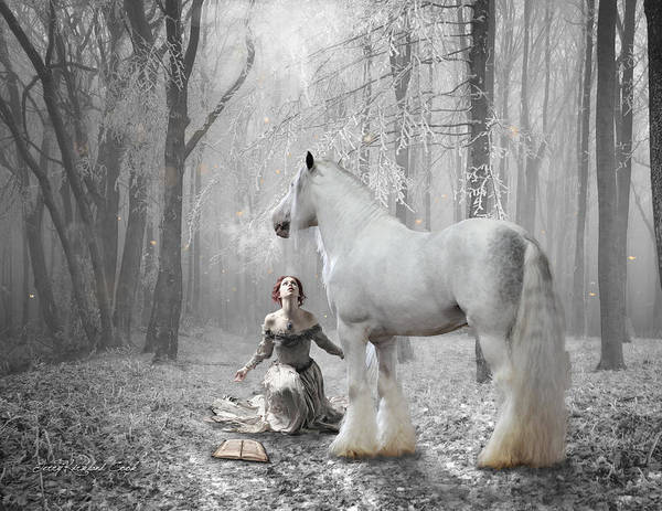 Photograph - The White Fairytale by Terry Kirkland Cook