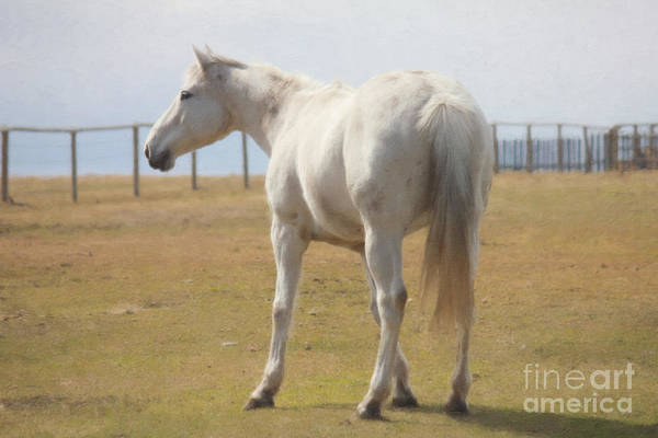 Photograph - The White Horse by Donna L Munro