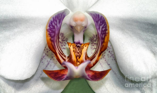 Painting - The White Orchid by Odon Czintos