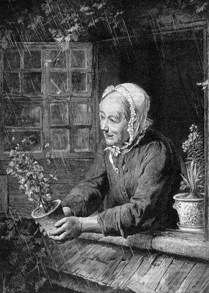 Wall Art - Drawing - The Widow's Plant -- An Old Lady Leans by Mary Evans Picture Library