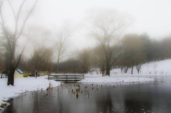 Wall Art - Photograph - The Willows In Winter - Newtown Square Pa by Bill Cannon