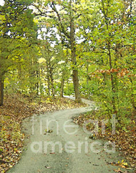 Photograph - The Winding Trail by Lee Owenby