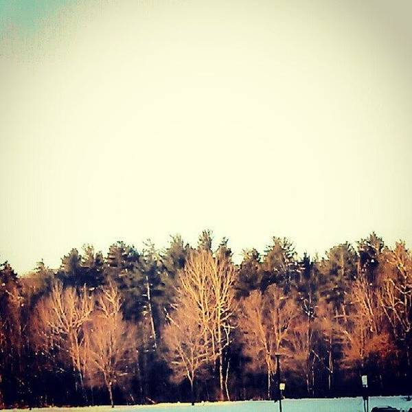 The Canadian Photograph - #the #winter #woods #behind #school by Kev Thibault