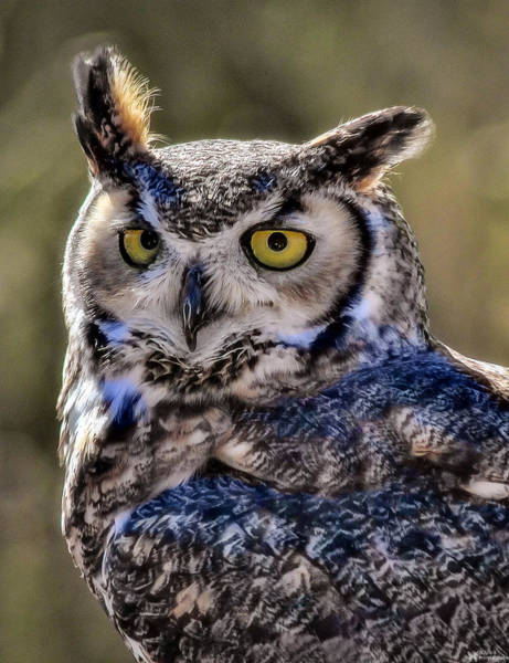 Photograph - The Wise Old Owl by Elaine Malott