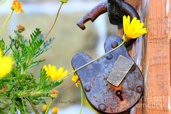 Photograph - The Wise Owl Padlock - Cambria California  by Tap On Photo