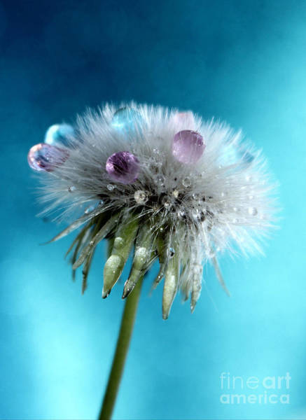 Exquisite Photograph - The Wish by Krissy Katsimbras
