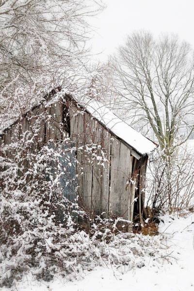 Photograph - The Wooden Shed by John Kiss